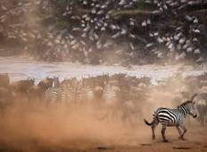 The Ultimate Migration Safari Tour