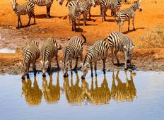 4 Days 3 Nights Masai Mara - Nakuru Tour