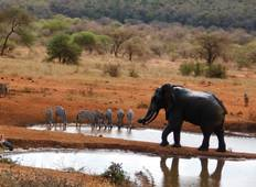 7 Days Kenya Safari – Amboseli NP, Tsavo West, Taita Hills/Salt Lick and Tsavo East National Park Tour