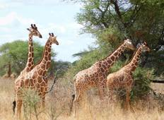 8 Days Kenya Safari – Meru National Park, Aberdare National Park,  Naivasha/Hellsgate, Lake Bogoria and Masai Mara Tour