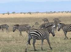 2 Days Ngorongoro Crater & Tarangire National Park Tour