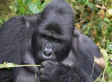 Gorillas And Wildlife Uganda: 8 Days Tour