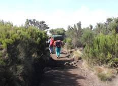 Climb Kilimanjaro: Machame Route 7 Days Adventure Tour