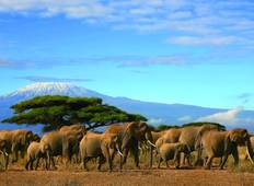 The Plains of Africa Kenya Wildlife Safari (Nairobi to Amboseli) (Standard) Tour