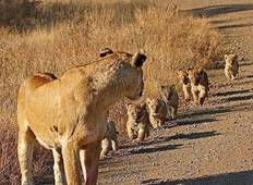 4 Days Join Group Tarangire, Serengeti & Ngorongoro Tour