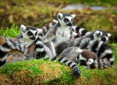 Madagascar. Treasures of the islands of lemurs Tour