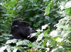 Rwanda Exclusive: Gorillas and the Wild Tour