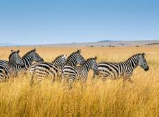 Camping in the Masai Mara - 3 Days Tour