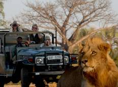 Leopards, Lions and Tiger Fish Tour