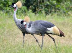 The Birds and the Beasts of Uganda Tour
