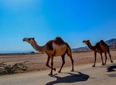 Beauty of the Sultanate 3 Days – Oman Tour Package Tour