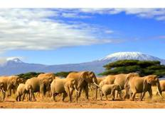 Kenya Safari with African Elephants Tour