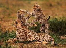 3 Days Tarangire, Ngorongoro Craeter & Lake Manyara Tour