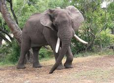 Intondolo Safaris Multi Days - 21 Days - Zimbabwe & Botswana Tour