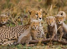 3 Days Nairobi National Park-Lake Nakuru & Naivasha Tour