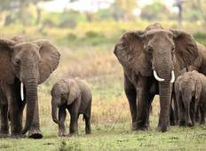 3-Day Amboseli National Park Semi Luxury Safari Tour