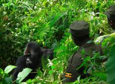 3 Days Gorilla Tracking Budget Safari  Tour
