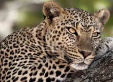 9 Days / 8 Nights Join group safari (home of the Big Five ) Tour
