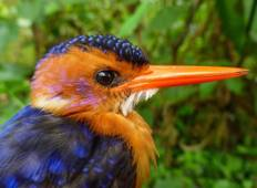 Ethiopia Birding Tour (6 destinations) Tour