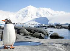 Antarctica, South Georgia & Falkland Islands 2020/2021 Tour