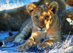 Etosha Express Safari 3 Days / 2 Nights Tour
