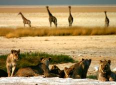 7 Days / 6 Nights Sossusvlei, Swakopmund and Etosha National Park Tour