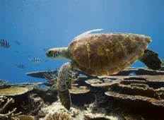Great Barrier Reef 3-Day Tour (from Gold Coast) Tour