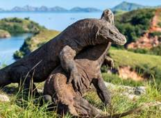 Private 4 Day Komodo Sail on Board with Regular Boat & Snorkeling Tour Tour