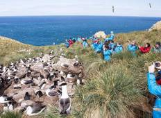 Chilean Fjords, Antarctica and Falklands - Great Explorers and Wildlife Tour