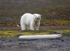 Circumnavigating the Svalbard Archipelago Tour