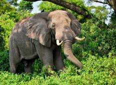 4-Day Big Five Uganda Safari Experience Tour