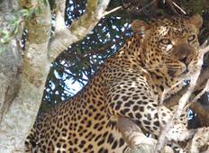3-Day Masai Mara Special Safari Tour