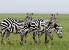 5-Day Big Five Adventure, Masai Mara & Amboseli Included Tour