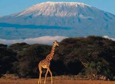 Mt. Kilimanjaro via Machame Route - 8 days budget camp Tour