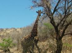 Pilanesberg Big 5 Reserve and Sun City Tour