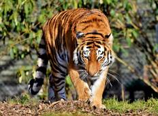 Golden Triangle Tour with Ranthambore Wildlife Safari from Delhi Tour
