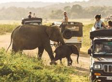 Sri Lanka sightseeing tours (13 Days, 12 NIghts) Tour