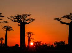 Baobabs, Tsingy and Lemurs of Madagascar Tour
