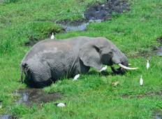 Amboseli Nationalpark Gruppensafari (All inclusive) - 3 Tage  Rundreise