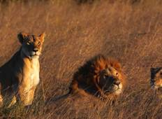 Maasai Mara Reserve Private Safari 02 Nights 03 Days  Tour