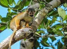 Iquitos Amazon Jungle Adventure 5D/4N Tour