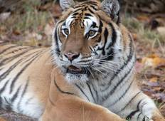Best selling tour of India The golden triangle tour with Tigers trail in ranthambore with luxury hotel stay Tour