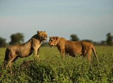 3 Days Safari in Serengeti and Ngorongoro Tour