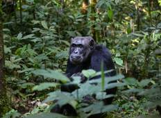 10 Days Gorilla, Chimpanzee and Murchison Falls Safari Tour