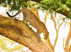 10 Days Primates & Lions Uganda Safari Tour