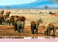 3-Days Best Wildlife Safari Tsavo East & Tsavo West From Mombasa (including Nairobi) Tour