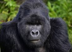 16 Days Best of Uganda and Gorillas Tour