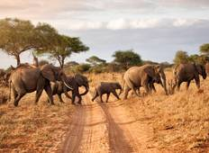 Tsavo East & Tsavo West 3days Wildlife Safari From Mombasa  Tour