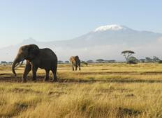3-Day Amboseli National Park All-Inclusive  Safari- Mid-range Tour