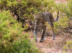 Samburu Nationalpark Safari (All Inclusive) - 3 Tage  Rundreise